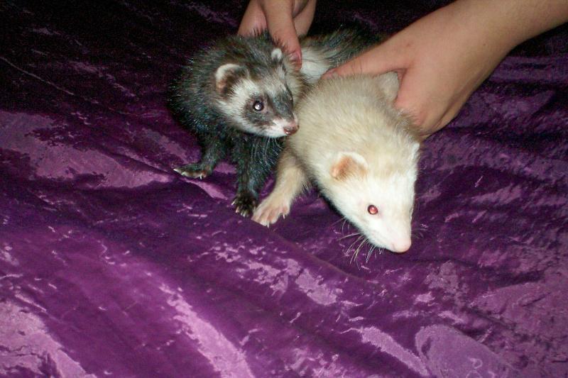 Pebbles & Bam bam