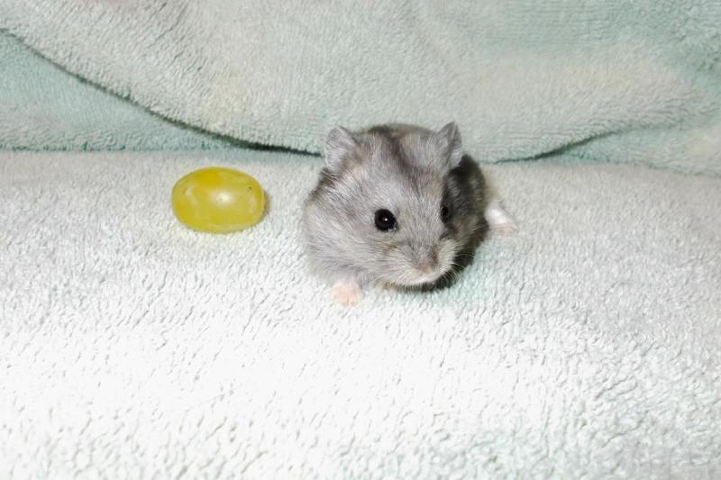 ham grape