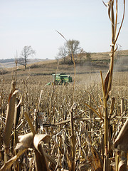 Harvest time in Iowa