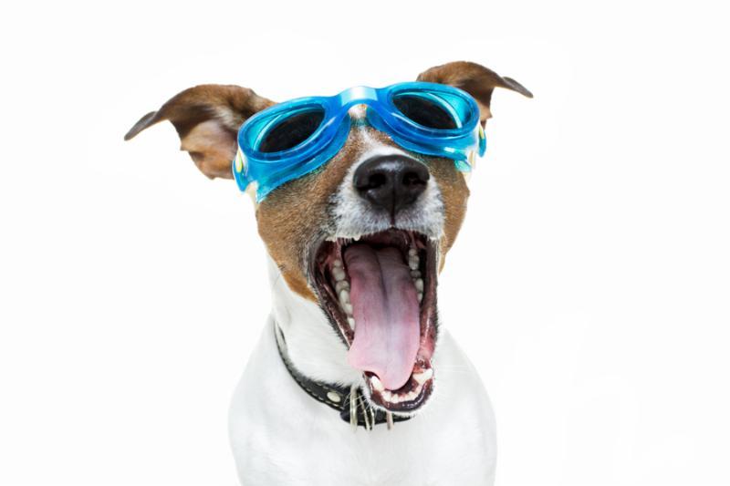 Goggle Dog