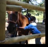 Horse_Programs