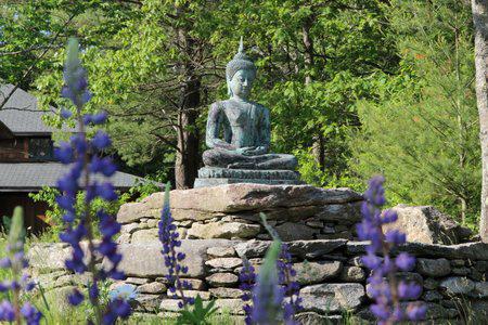 Forest Refuge Buddha