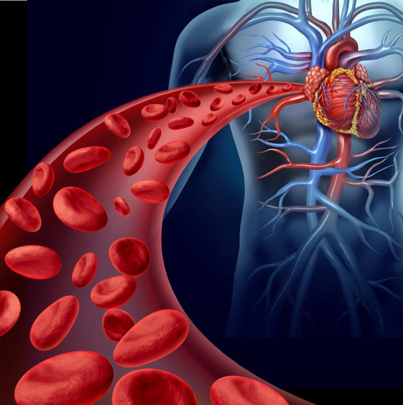 Heart blood health with red cells flowing through three dimensional veins from the human circulatory system representing a medical health care symbol of cardiology and cardiovascular fitness.