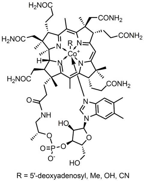 B12 structure