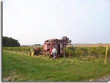 Knapp harvest