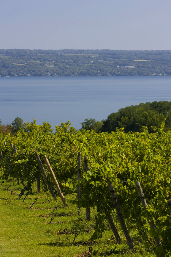 Knapp vineyard