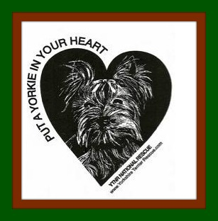 Put a Yorkie In Your Heart