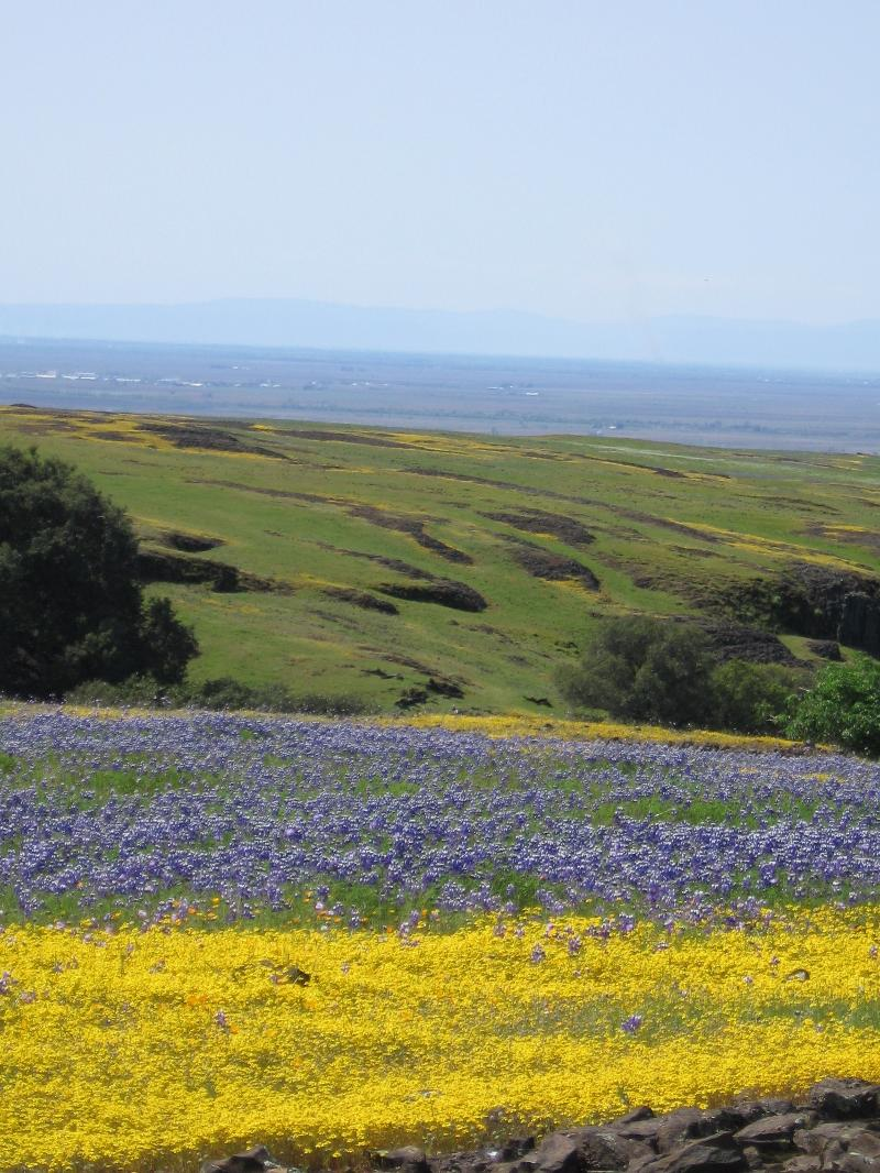Table mountain flower carpets