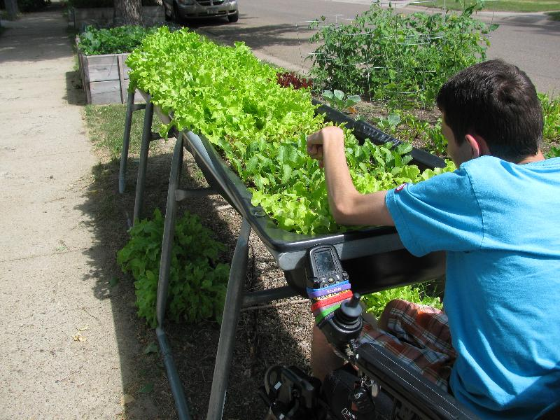 Isaac working in his lettuce bed
