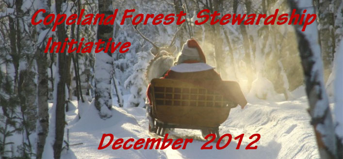 Santa and his sleigh in the forest