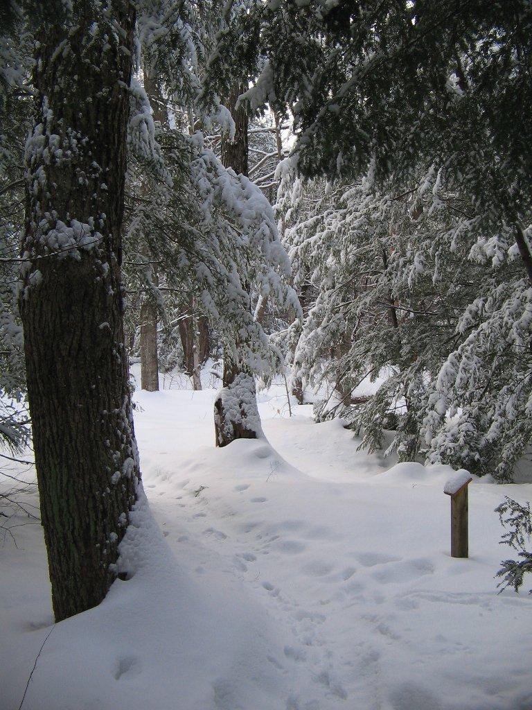 Winter scene at Grant's Woods
