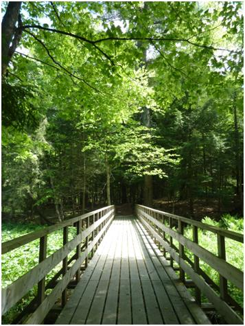 Bridge at Grants Woods