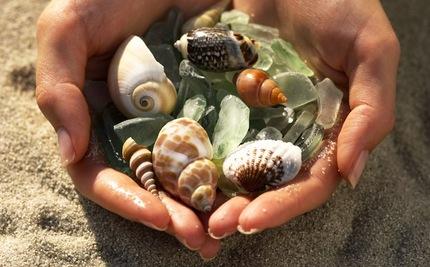 Hey Tourists: Leave Those Shells on the Beach, Would Ya?