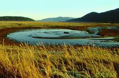 AK Wetlands