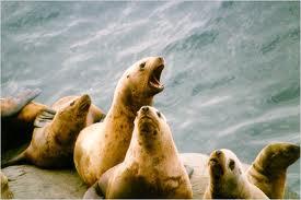 Steller Seal