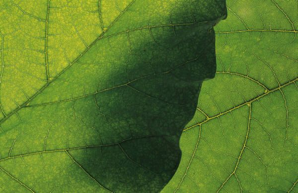 green of leaf