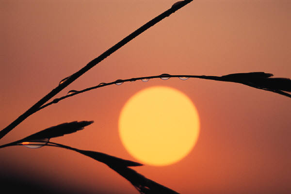 Sunrise with dew drop