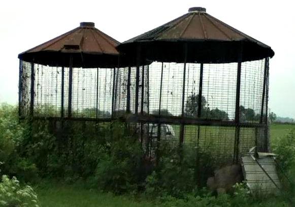 maddie cage