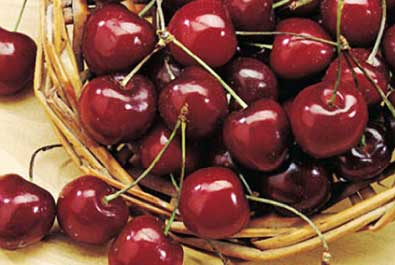 Basket of Bings Cherries
