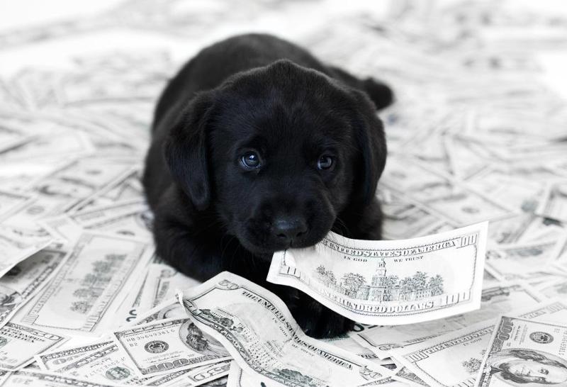 Black Lab on pile of money