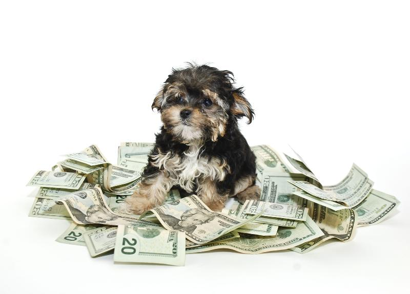 dog on pile of money