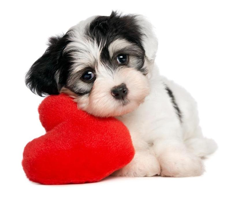 dog leaning on heart