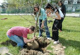 wcpltreeplanting
