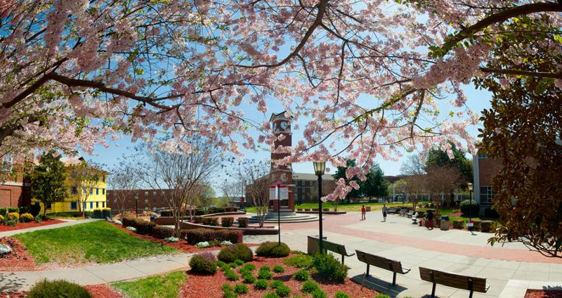 Cherry Blossoms & Clocktower at WSSU
