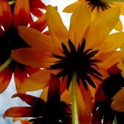 flowersbacks by Anne Lohr