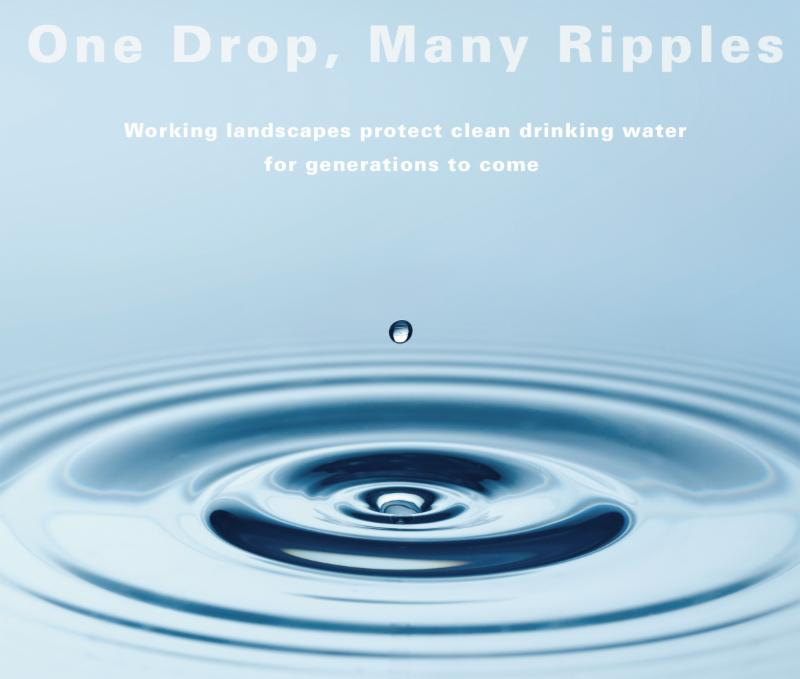 One Drop, Many Ripples