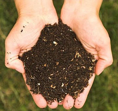 Compost sample