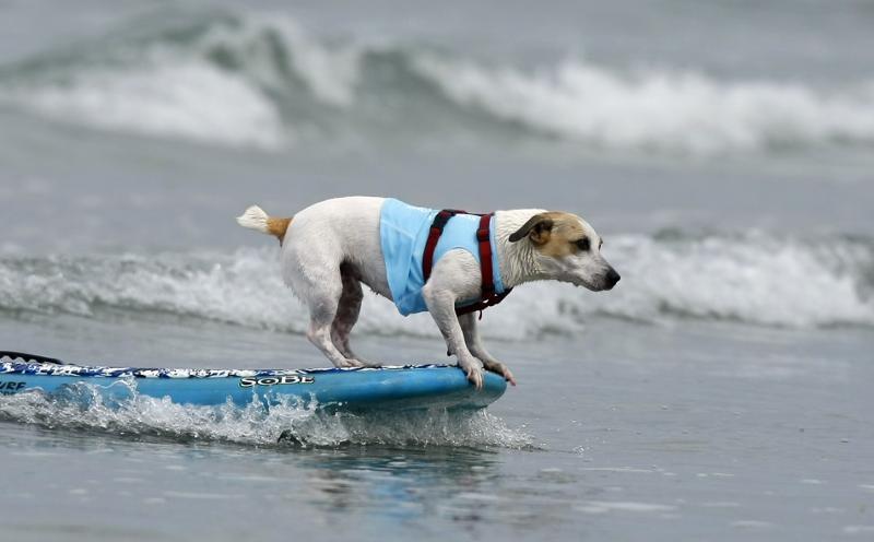 Loews Surf Dog June 16, 2012
