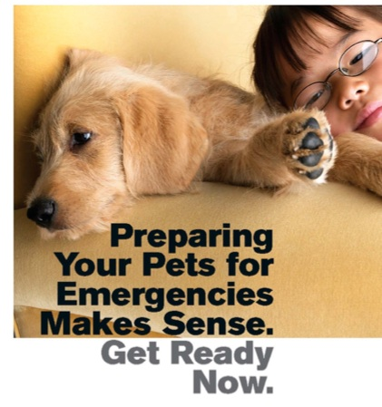 Preparing Your Pets for Emergencies