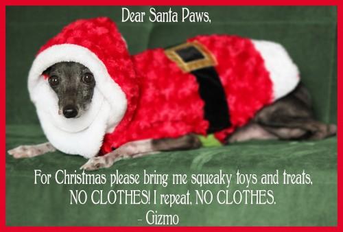 Gizmo wants sqeaky toy & treats