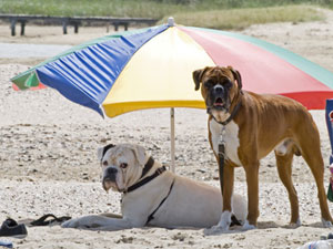 dogs under umbrella