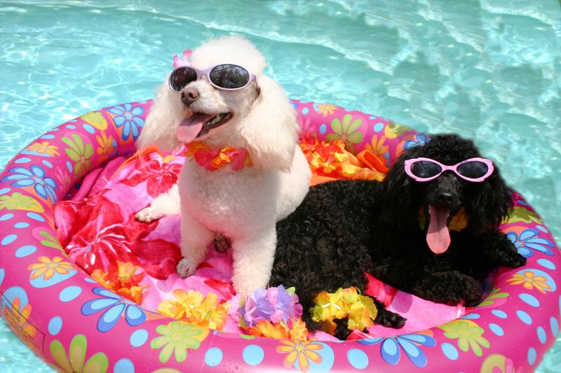 Dogs Enjoying Summer