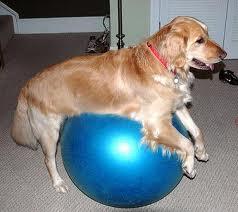 Dog on Ball