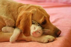 Dog & Kitten bonding