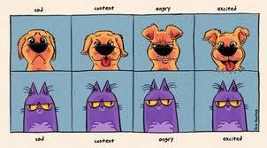 Dog&CatEmotions