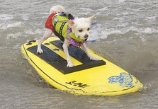 Loews Surf Dog event