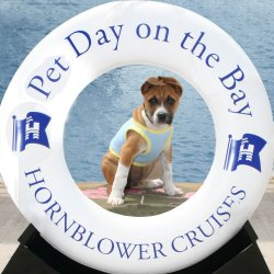 Pet Day on the Bay