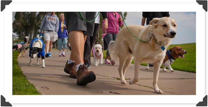 19th Annual Walk for Animals