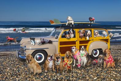 Helen Woodward Surf Dogs