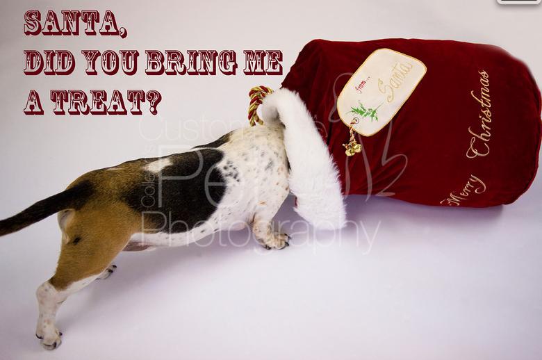 Colleen's Custom Pet Photography
