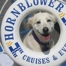 Hornblower Bow Wow Cruise
