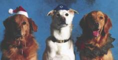 Three holiday dogs