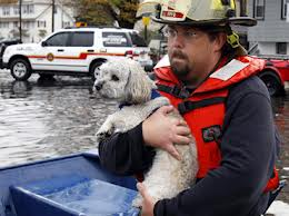 Fireman helping dog lost in Hurricane Sandy