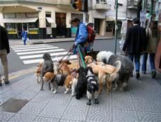 Dogs walking on loose leash