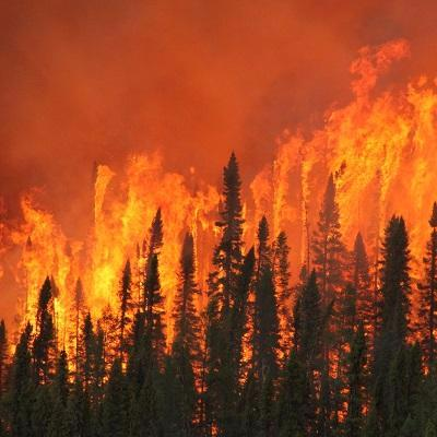Forest fire-Ministry of Natural Resources and Forestry