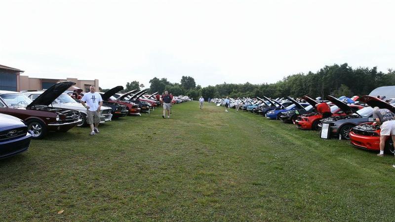 Mustangs & Mustangs cars 2013